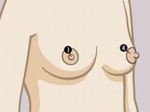 Părțile sânilor la exterior sunt: 3. sfârc, 4. areolă.
