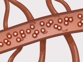Detaliu al unui vas de sânge cu multe celule albe care protejează organismul împotriva infecțiilor
